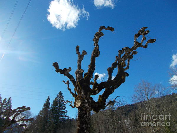 Wall Art - Photograph - Old Trees 4 by Angelika Heidemann
