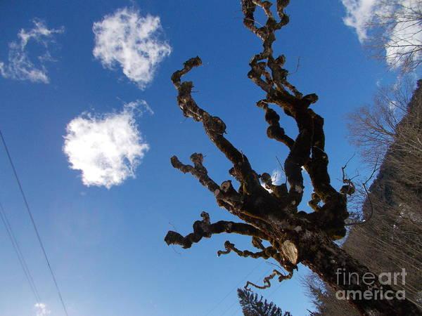 Wall Art - Photograph - Old Trees 5 by Angelika Heidemann