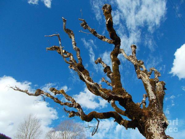 Wall Art - Photograph - Old Trees 6 by Angelika Heidemann