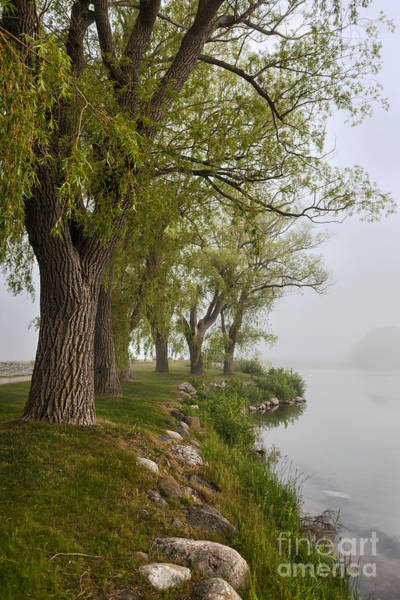 Wall Art - Photograph - Old Trees On Foggy Shore by Elena Elisseeva