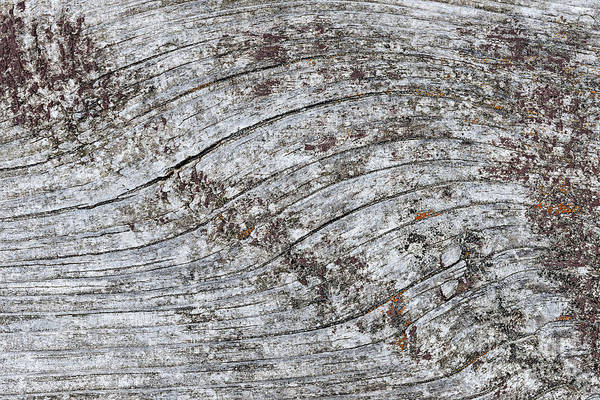 Wall Art - Photograph - Old Weathered Wood Abstract by Elena Elisseeva