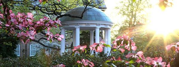 Old Well Dogwoods And Sunrise Art Print