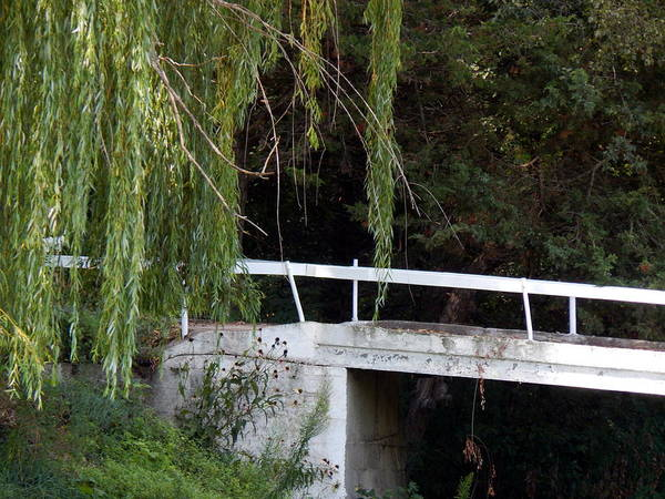 Photograph - Old Willow Bridge by Wild Thing