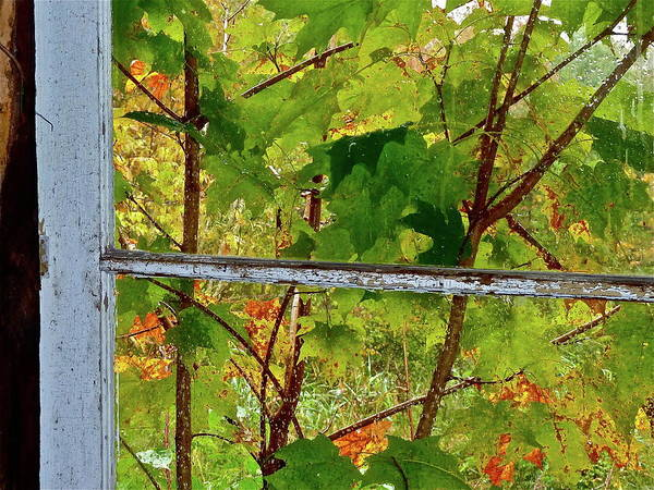 Photograph - Old Window by Diana Hatcher