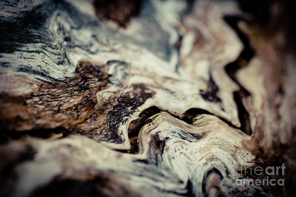 Photograph - Old Wood Abstract Vintage Background Texture  by Raimond Klavins