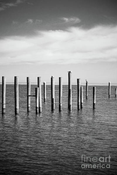 Wall Art - Photograph - Old Wood Pilings In Water by Colleen Kammerer