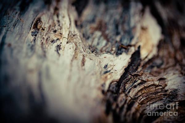 Photograph - Old Wood  by Raimond Klavins