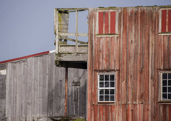 Photograph - Old Wood by Robert Potts
