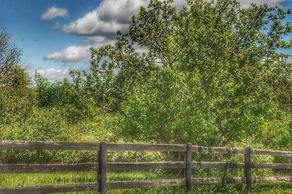 Photograph - 9008 - Country Fence And Tree by Sheryl L Sutter