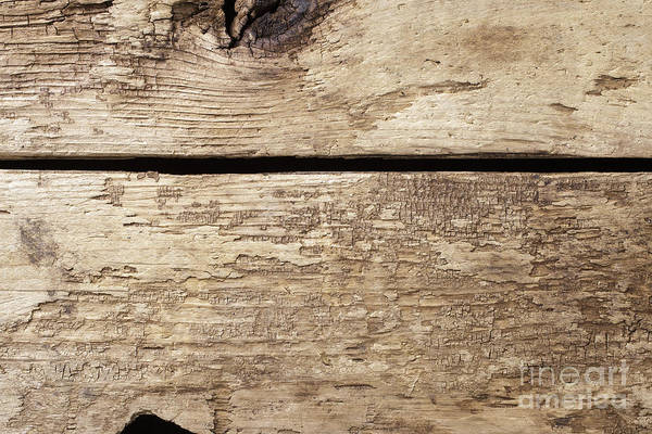 Photograph - Old Wooden Planks by Edward Fielding