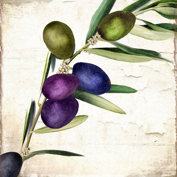 Olive Oil Painting - Olive Branch II by Mindy Sommers