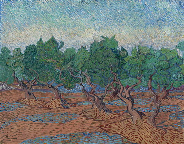 Olive Oil Painting - Olive Grove, 1889 03 by Vincent Van Gogh