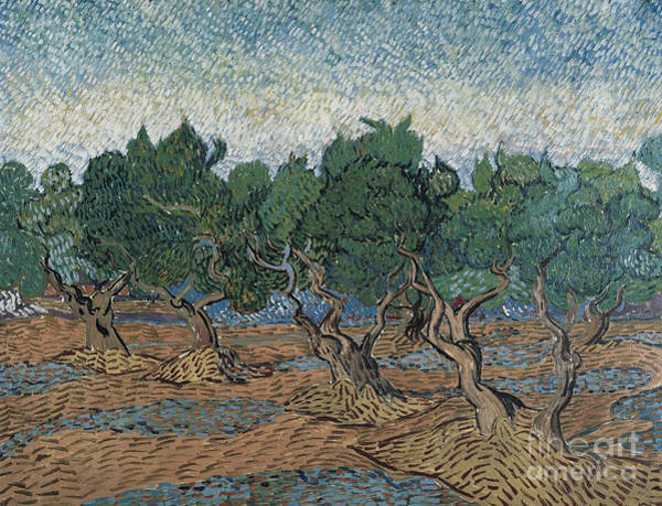 Wall Art - Painting - Olive Grove, 1889 by Vincent Van Gogh