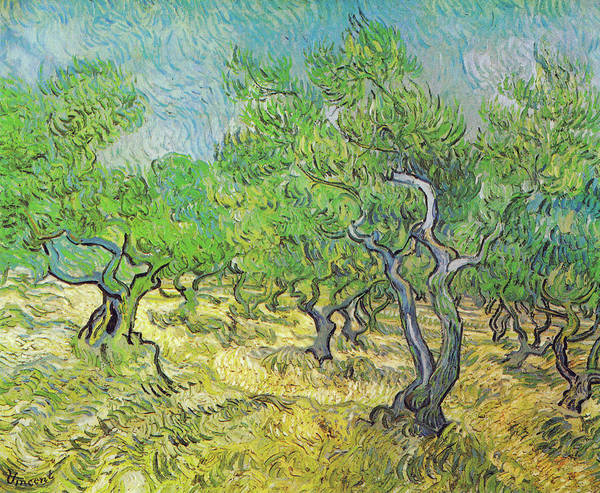 Painting - Olive Grove June 1889 by Vincent van Gogh