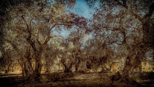 Photograph - Corfu, Greece - Olive Grove Panorama by Mark Forte