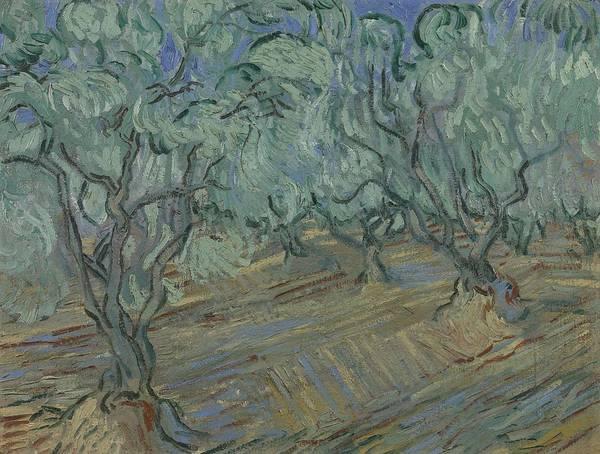 Painting - Olive Grove Saint Remy De Provence  June 1889 Vincent Van Gogh 1853  1890 by Artistic Panda