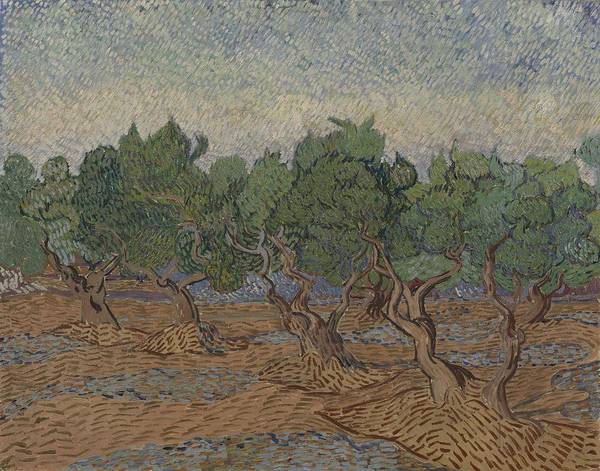 Painting - Olive Grove Saint Remy De Provence  November - December 1889 Vincent Van Gogh 1853  1890 by Artistic Panda