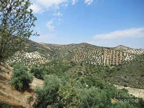 Photograph - Olive Groves Near Iznajar by Chani Demuijlder