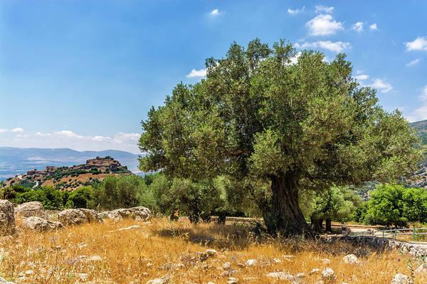 Olive Branch Digital Art - Olive Tree And Nimrod Fortress by Tsafreer Bernstein