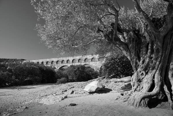Photograph - Olive Tree And Pont Du Gard, France by Richard Goodrich