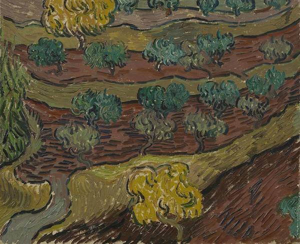 Painting - Olive Trees On A Hillside Saint Remy De Provence  November   December 1889 Vincent Van Gogh 1853  by Artistic Panda