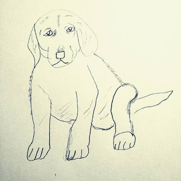 Wall Art - Drawing - Oliver  by Angelina Elliott