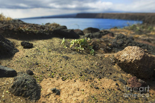 Photograph - Olivine Crystals - South Point Big Island by Charmian Vistaunet