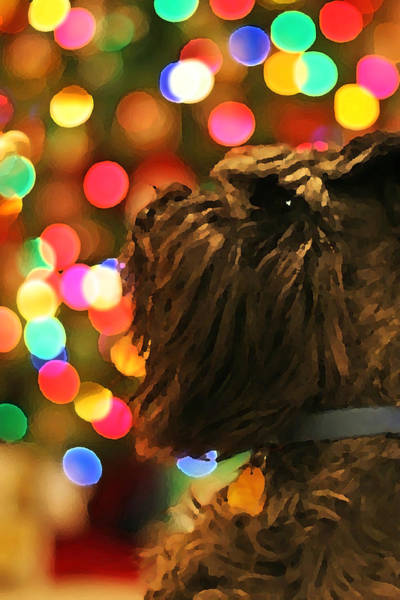 Photograph - Ollie The Dog by David Ralph Johnson