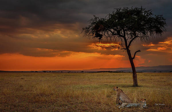 Photograph - On A  Serengeti Evening  by Tim Bryan