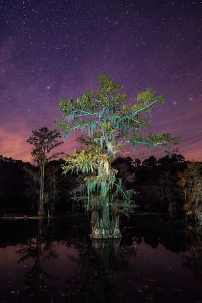 Wall Art - Photograph - On A Starry Night - A Portrait Of A Bald Cypress Tree by Ellie Teramoto