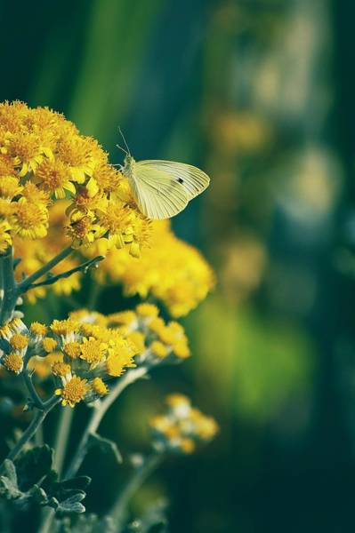Photograph - On A Warm Summer Day by Angie Tirado
