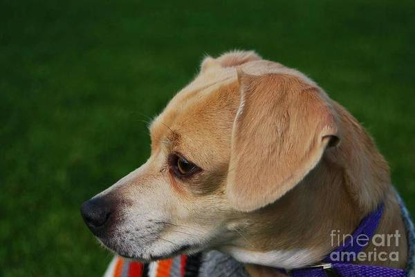 Dog Biscuit Photograph - On Alert by Angela J Wright