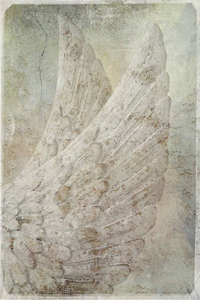Photograph - On Angels Wings by Jill Love