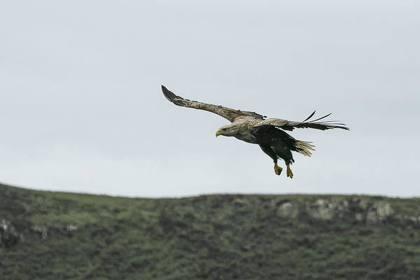 Photograph - On Approach by Wendy Cooper