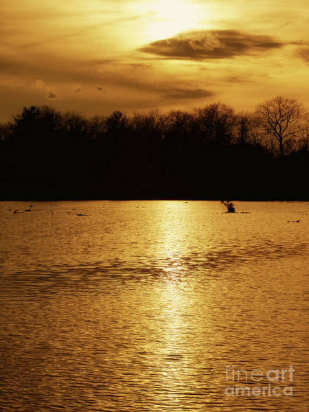 Photograph - On Golden Pond by Mark Miller