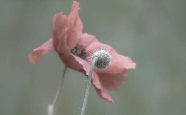 Photograph - On Looker Pod And Poppy by Barbara St Jean