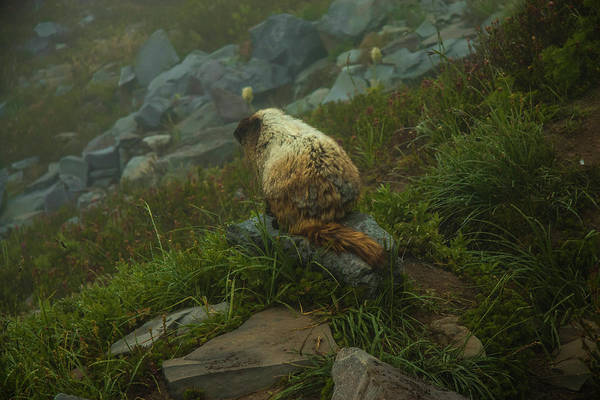 Photograph - On Lookout by Doug Scrima