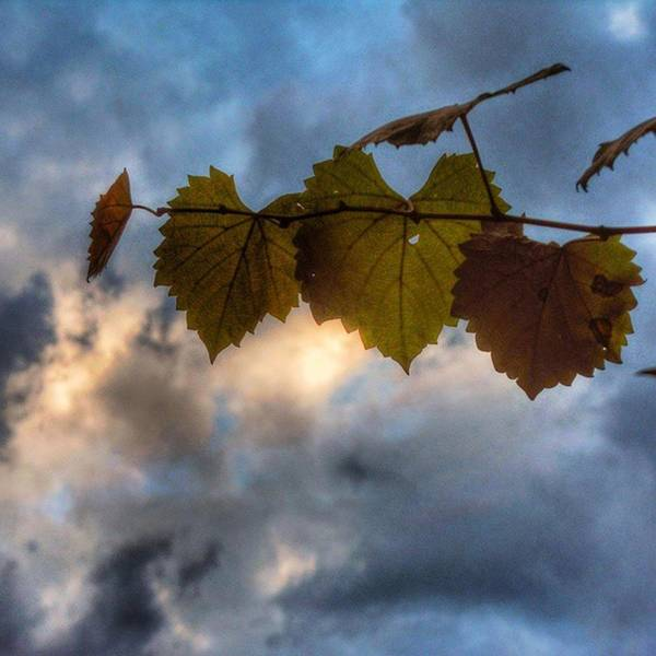 Photograph - On My Way Home... #naturephotography by Cheray Dillon