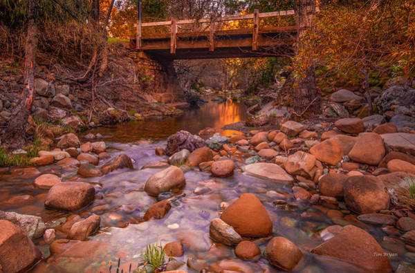 Photograph - On Tablas Creek by Tim Bryan