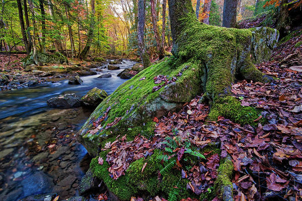 Photograph - On The Banks Of Laurel Fork by Andy Crawford