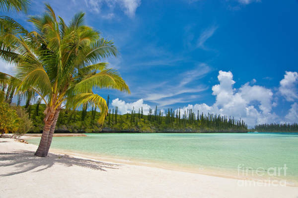 Coconut Trees Photograph - On The Beach by Delphimages Photo Creations