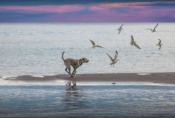 Photograph - On The Beach by Randall Nyhof