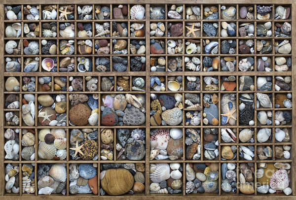 Cockle Wall Art - Photograph - On The Beach by Tim Gainey
