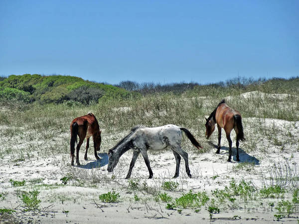 Photograph - On The Beach With Wild Horses by D Hackett
