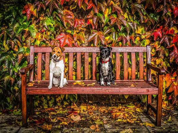 Photograph - On The Bench by Nick Bywater