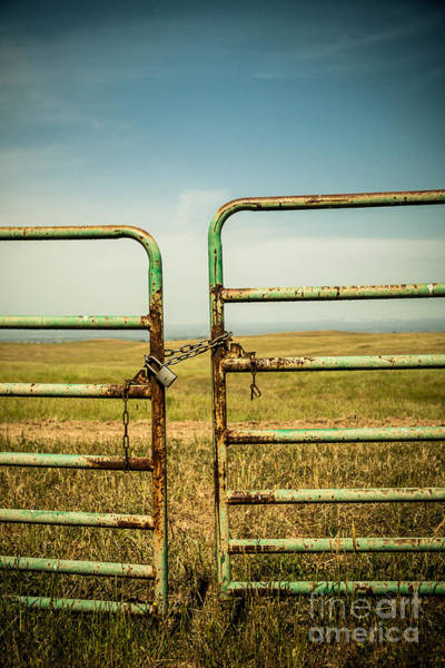 Photograph - On The Farm by Ana V Ramirez