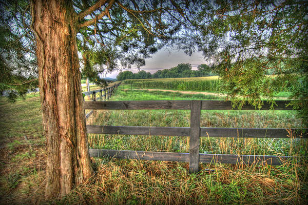 Photograph - On The Farm by Patricia Montgomery