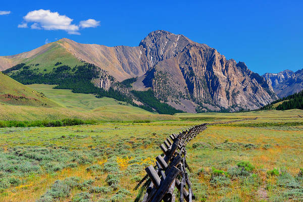 Photograph - On The Fence by Greg Norrell