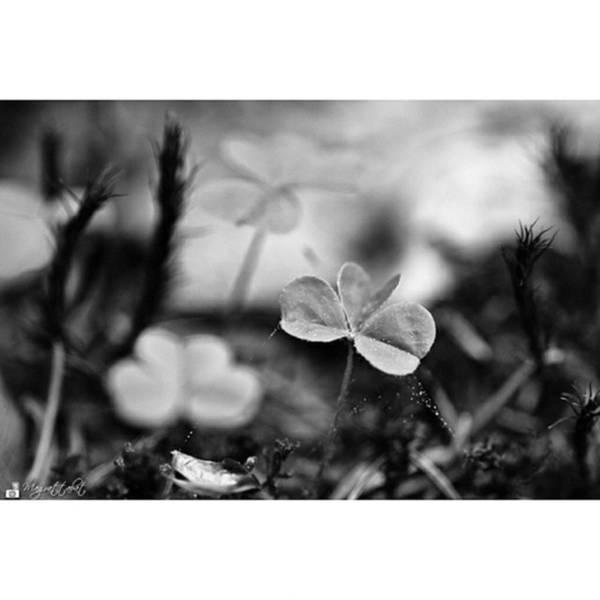Macro Photograph - On The Forest Floor  #monochrome by Mandy Tabatt