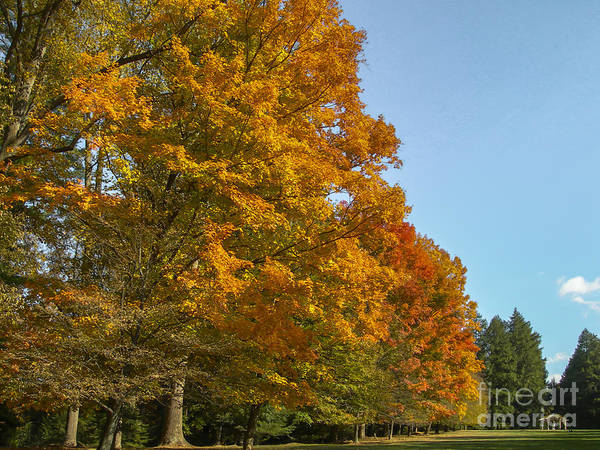 Photograph - On The Grounds Of The Biltmore Estate by Dale Powell